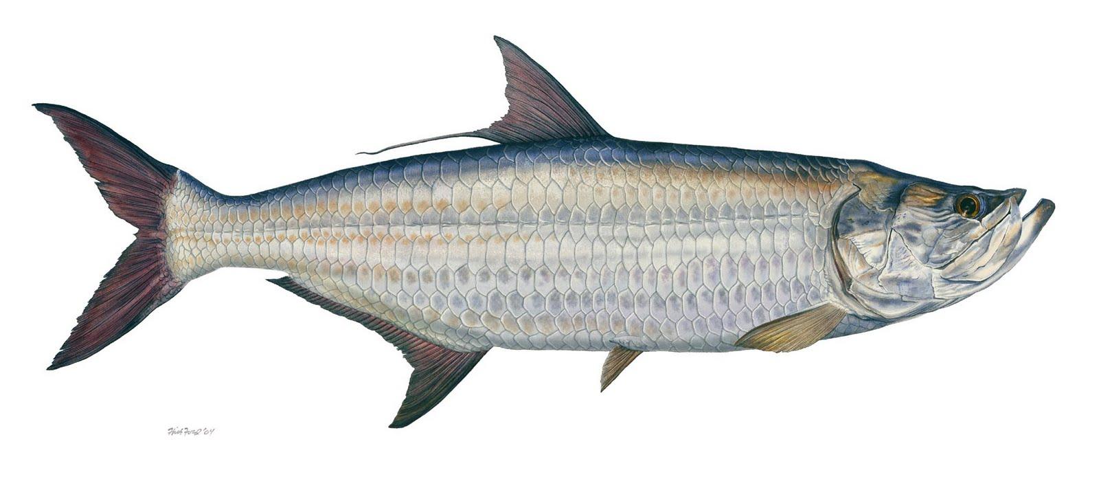 April 2013 randomfishblog for Fish fish fish fish fish