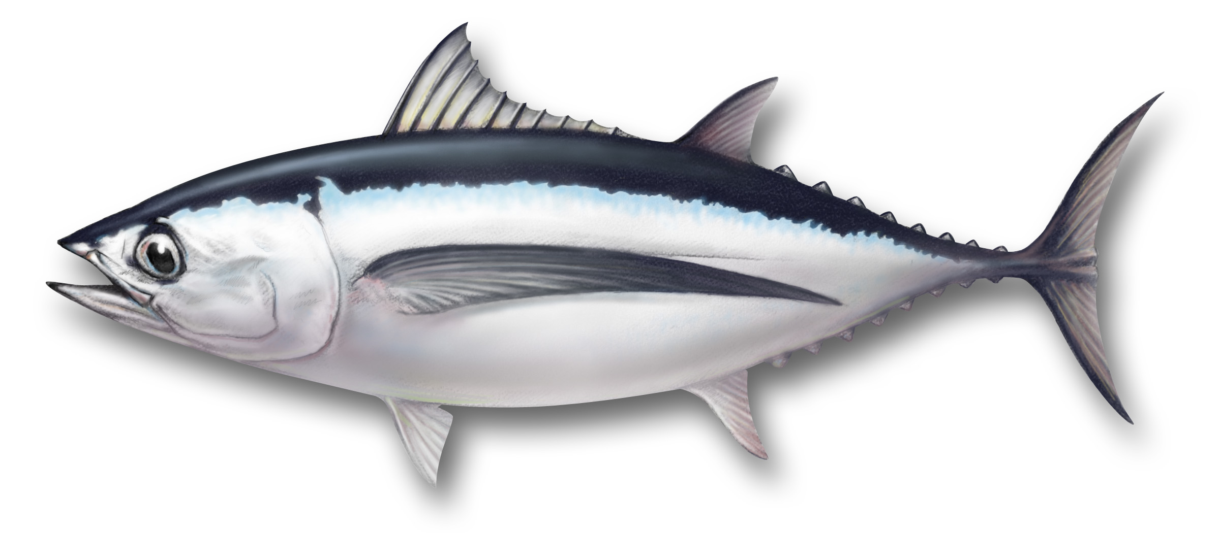 Longline randomfishblog for Fishpond fishing